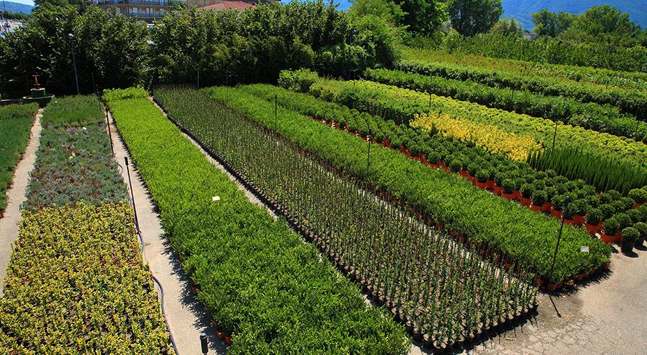 Produzione piante for Piante ornamentali da vaso per esterno